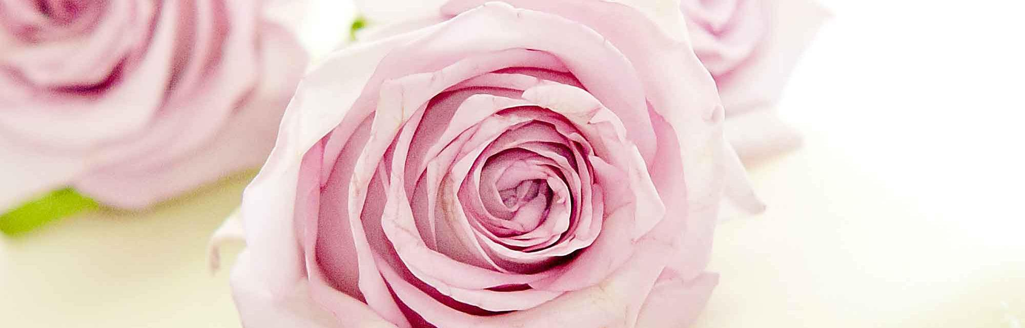 Wedding floristry services header