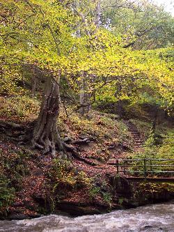 Ousbrough Wood