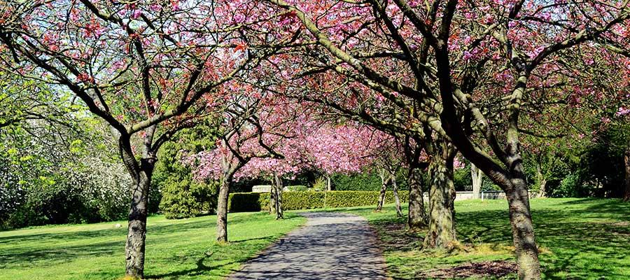 Saltwell Park blossom