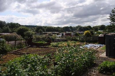 Gateshead allotment