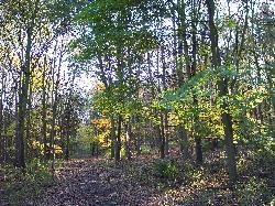 Addison and Hedgefield Woods