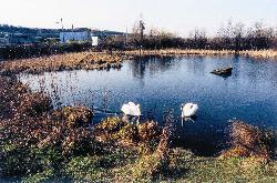 Dunston Pond